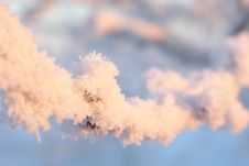 Free Hoar-frost Stock Image - 4720091
