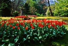 Free Tulips Stock Photo - 4720490