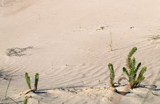 Free Fat Plant On The Beach Royalty Free Stock Images - 4721089