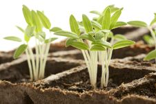 Free Sprouting Plants Stock Photo - 4721450