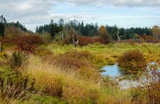 Free Marshes In The Autumn Stock Photography - 4722722