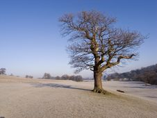 Free Tree In Frosty Park Royalty Free Stock Photos - 4723298