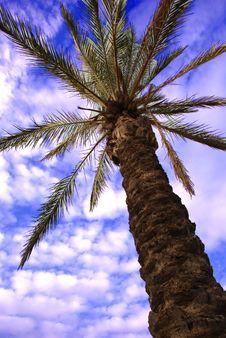 Free Tree Royalty Free Stock Photo - 4724175