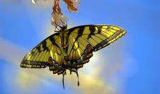 Free Butterfly Royalty Free Stock Images - 4725569