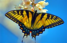 Free Butterfly Stock Photos - 4725573