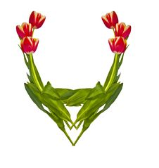 Free Vignette From Tulips3 Royalty Free Stock Photography - 4725827
