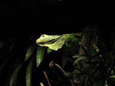 Free A Green Lizard Stock Photo - 4726230