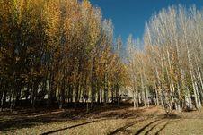 Free Beautiful Plateau Of Forest Stock Photo - 4728360