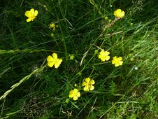 Free Small Yellow Flowers On Dark Grass Stock Image - 4728931