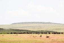 Free Masai Mara Reserve Stock Photos - 4729203