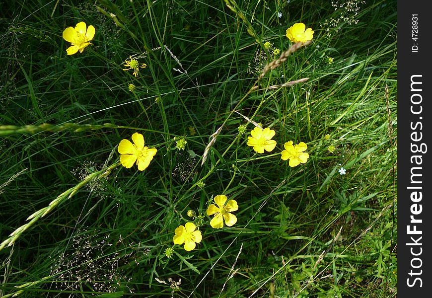 Small yellow flowers on dark grass free stock images photos small yellow flowers on dark grass mightylinksfo
