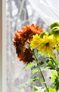 Free Bouquet Of Multicolored Chamomiles In Sunshine Royalty Free Stock Photo - 4731355