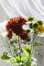 Free Bouquet Of Multicolored Chamomiles In Sunshine Royalty Free Stock Photography - 4731367