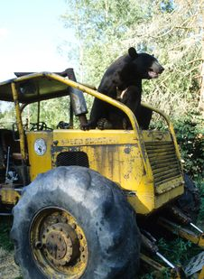 Free Bear On A Tractor Royalty Free Stock Image - 4730046