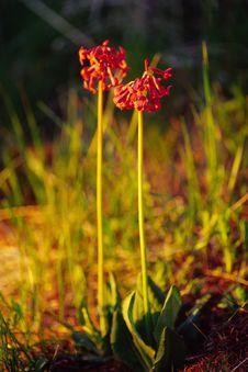 Free Wild Flowers Stock Image - 4730311