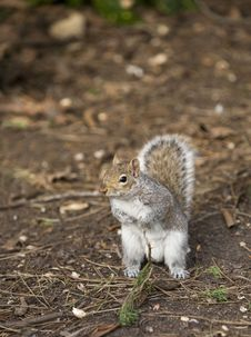 Free Squirrel Stock Photos - 4732423