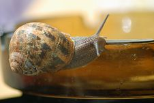 Free Snail Stock Images - 4735234