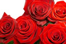 Free Brightly Red Roses Stock Photography - 4735522