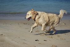 Free Playful Dog Stock Images - 4735794