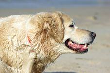 Free Joyful Dog Stock Photography - 4736092