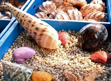 Free Different Seashells Stock Images - 4736244