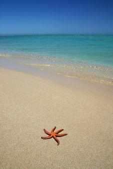 Free Starfish On The Beach Royalty Free Stock Images - 4737249