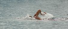 Free Swim The Front Crawl Stock Photography - 4738532