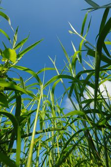 Free Green Grass And Blue Sky Stock Photo - 4738910