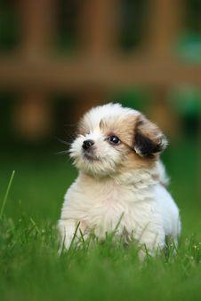 Free Baby Dog Royalty Free Stock Image - 4739656