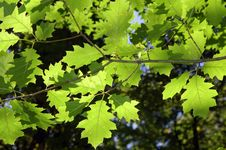 Free Leafs In The Forest Royalty Free Stock Image - 4739666