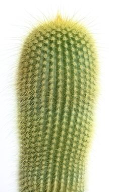 Free Cactus Stock Images - 4739834