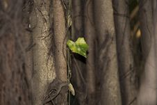 Free Lonely Leaf Among The Branches Royalty Free Stock Image - 47355026