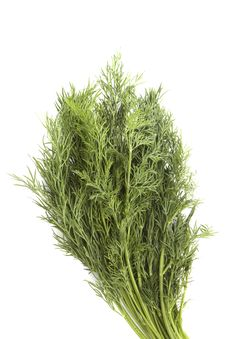 Free Bunch Of Fennel Royalty Free Stock Photography - 4740757