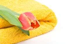 Free Yellow Towel And Tulip Stock Image - 4740881