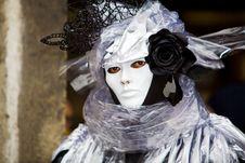 Free Black Rose Royalty Free Stock Photos - 4741838
