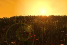 Free Sunset Wheat Fields Stock Photos - 4743723