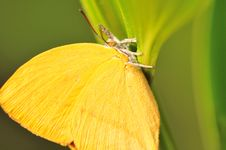 Free Butterfly Close Up Stock Image - 4743821