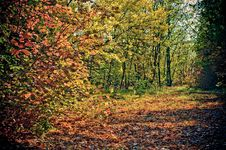 Free Autumn Morning Royalty Free Stock Image - 4744316