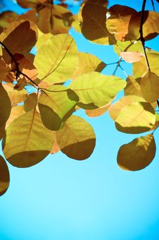 Free Autumn Leaves Royalty Free Stock Photo - 4744325