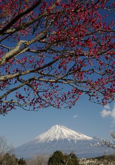 Free Mt Fuji-dg 48 Stock Photography - 4744562