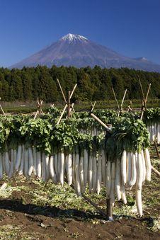 Free Mt Fuji-dg 39 Royalty Free Stock Photography - 4744617