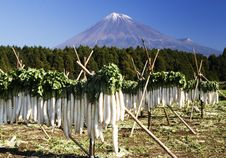 Free Mt Fuji-dg 38 Stock Photo - 4744620