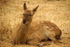 Free Elk Stock Image - 4744651