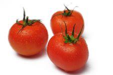Free Fresh Three Tomato Stock Image - 4745001