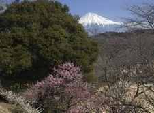 Free Mt,Fuji-dg-8113 Royalty Free Stock Photography - 4745007