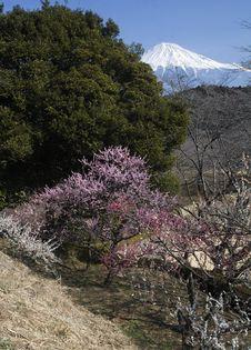 Free Mt,Fuji-dg-8116 Royalty Free Stock Photos - 4745008