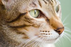 Free Cat Face Royalty Free Stock Image - 4745026