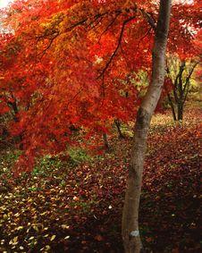 Free Nature -83 Stock Photos - 4745293