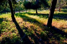 Free Forest Royalty Free Stock Photography - 4746367