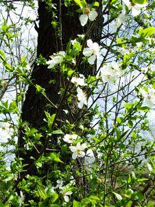 Free Spring Stock Photo - 4747200